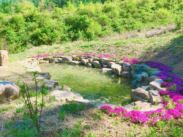 달골 명상정원 아침뜨락의 밥못.jpg